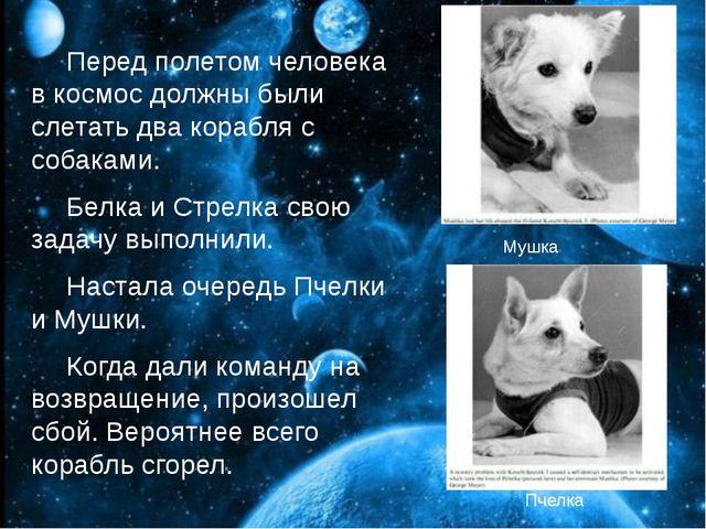 Перед полетом человека в космос должны были слетать два корабля с собаками....