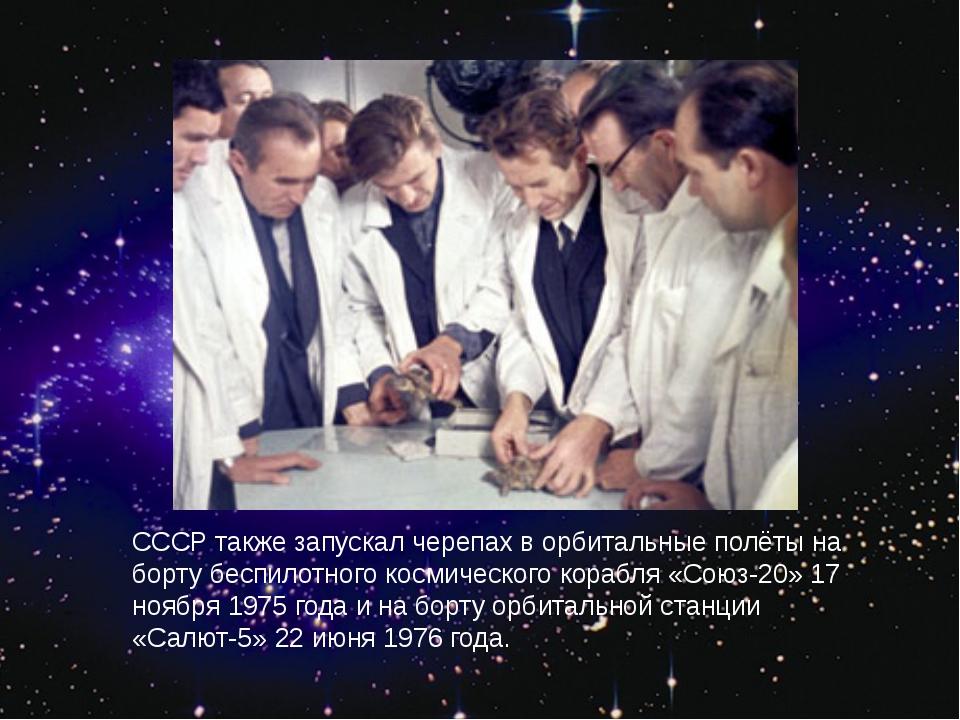 СССР также запускал черепах в орбитальные полёты на борту беспилотного космич...