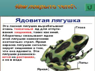 У земноводных нет ни шерсти, как у зверей, ни перьев, как у птиц, ни чешуи, к