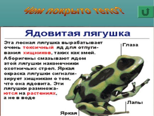 У земноводных нет ни шерсти, как у зверей, ни перьев, как у птиц, ни чешуи, к...