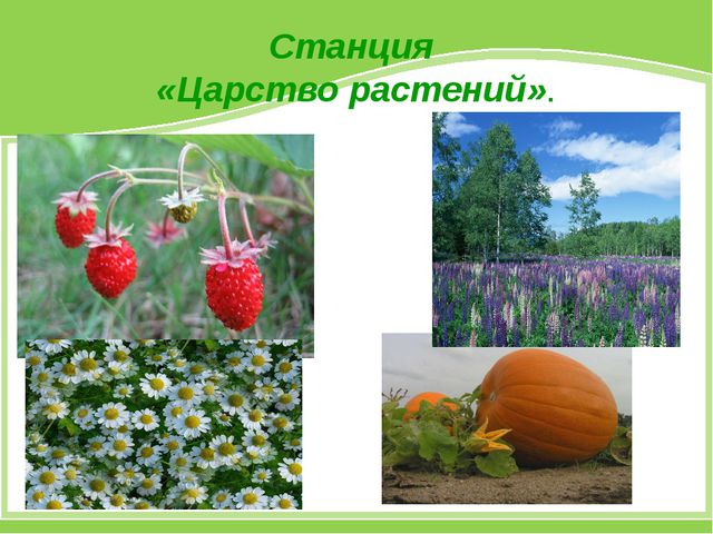 Станция «Царство растений».