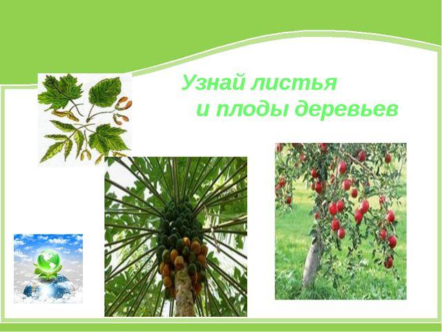 Узнай листья и плоды деревьев