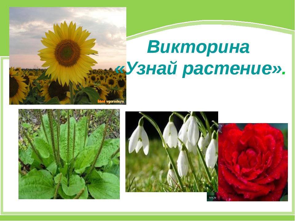 Викторина «Узнай растение».