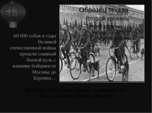 Впервые собаки идут рядом с человеком и на Параде Победы 24 июля 1945 года 60