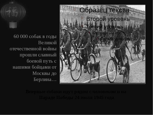 Впервые собаки идут рядом с человеком и на Параде Победы 24 июля 1945 года 60...
