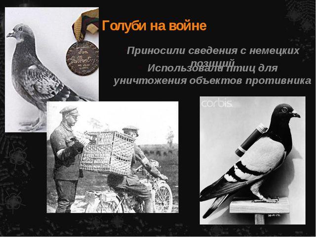 Голуби на войне Приносили сведения с немецких позиций Использовали птиц для у...