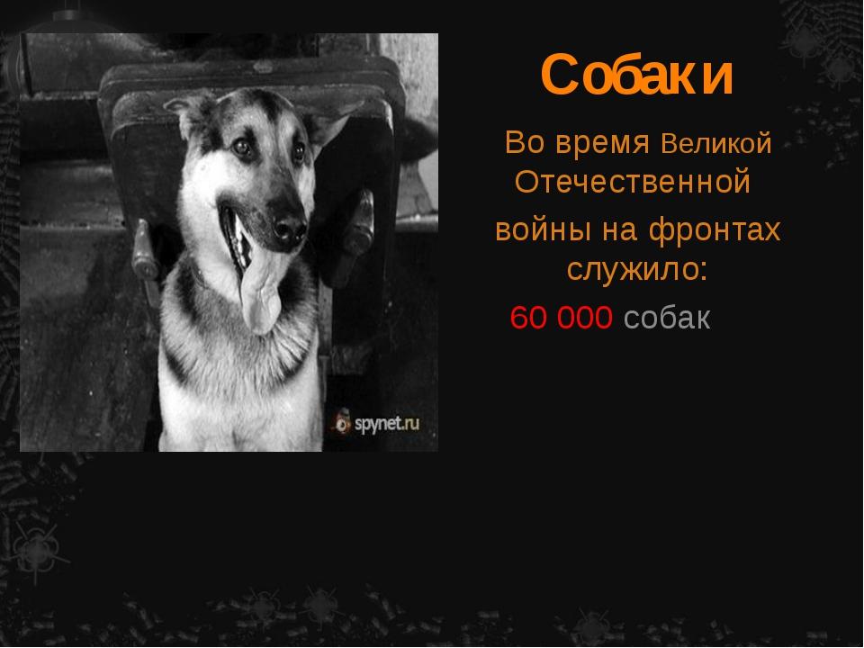 Собаки Во время Великой Отечественной войны на фронтах служило: 60 000 собак