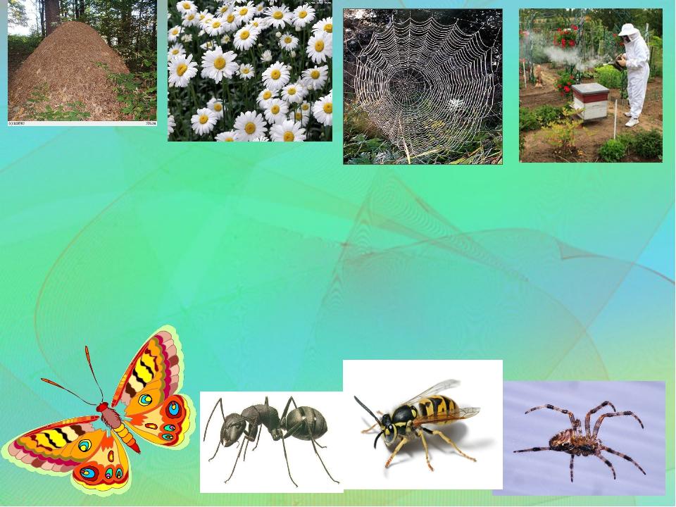 картинки для презентации по теме насекомые что