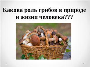 Какова роль грибов в природе и жизни человека???