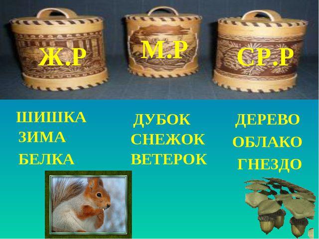 Ж.Р М.Р СР.Р ШИШКА ДЕРЕВО ЗИМА ДУБОК ОБЛАКО БЕЛКА СНЕЖОК ГНЕЗДО ВЕТЕРОК