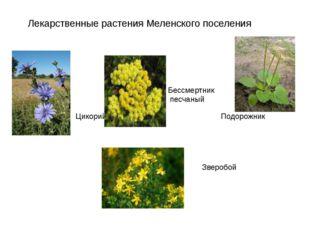 Лекарственные растения Меленского поселения Цикорий Бессмертник песчаный Подо