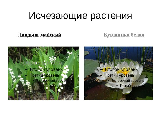 Исчезающие растения Ландыш майский Кувшинка белая