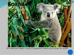 О Р Л И С А Г Р О А Х В О С Т Птица, которая водится только в Австралии. Т Ли