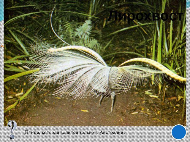 http://www.nadidem.net/k/elptkm/images/Eliptik_jpg.jpg - лист http://www.20na...