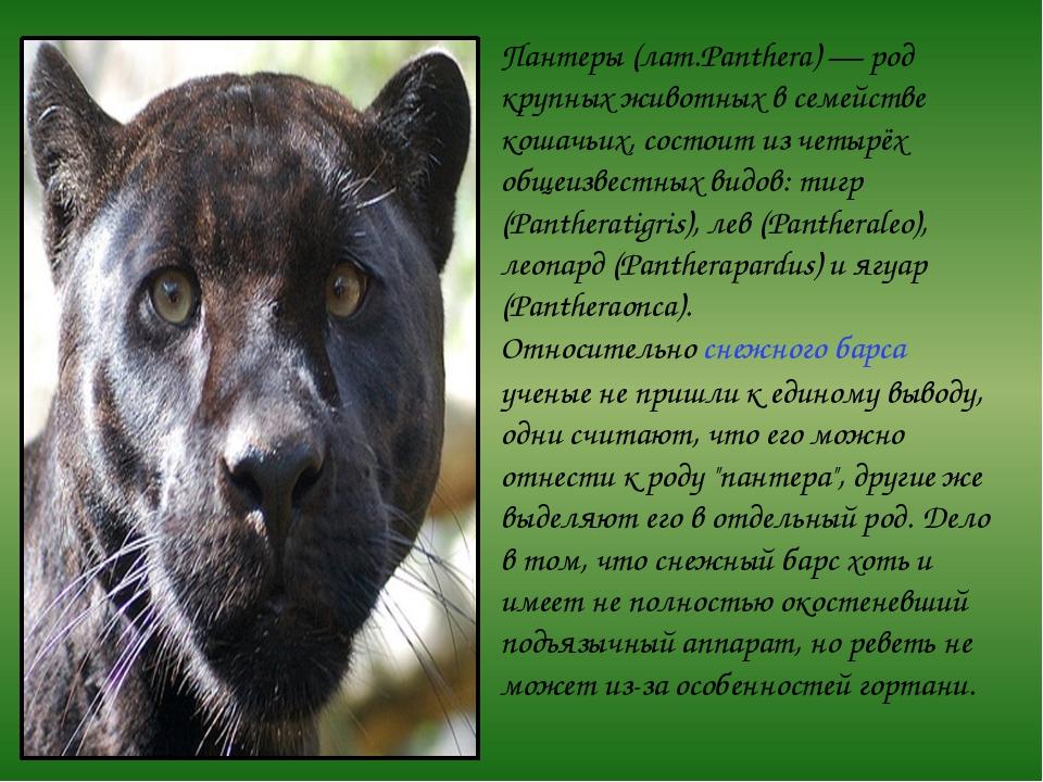 Пантеры (лат.Panthera) — род крупных животных в семействе кошачьих, состоит и...