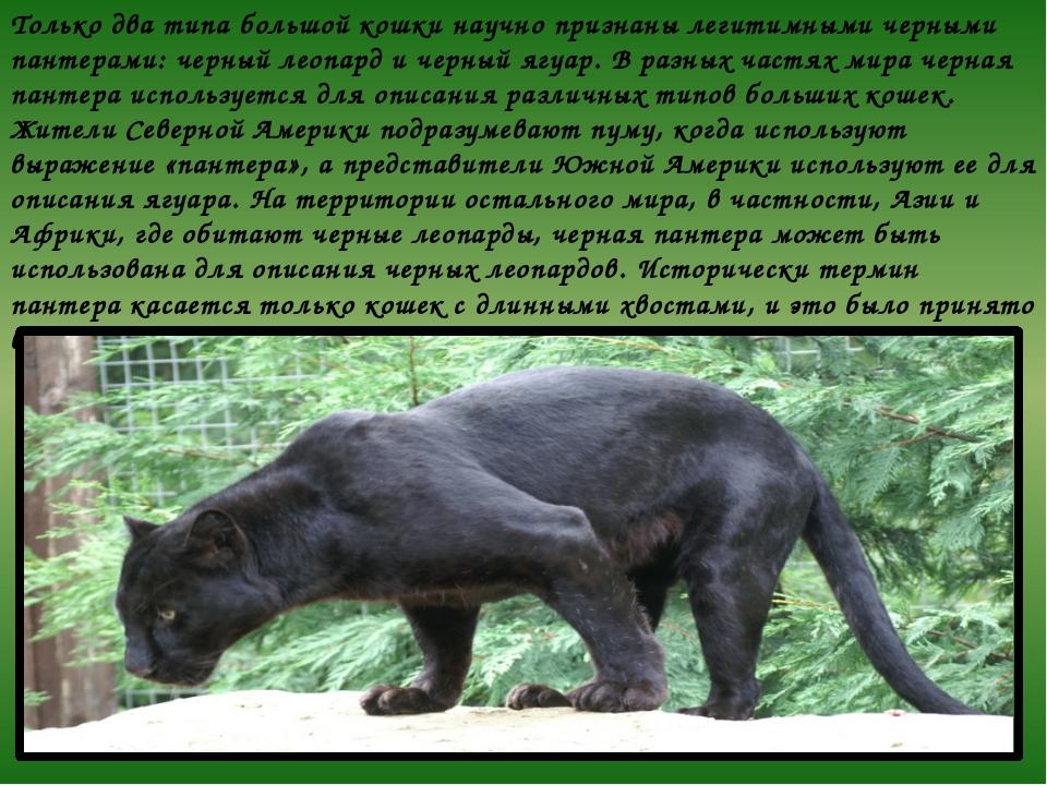 Только два типа большой кошки научно признаны легитимными черными пантерами:...