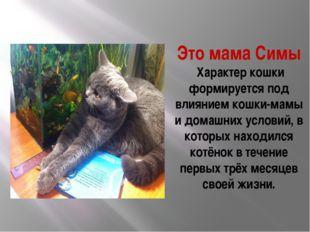 Это мама Симы Характер кошки формируется под влиянием кошки-мамы и домашних у
