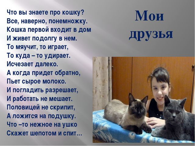 Что вы знаете про кошку? Все, наверно, понемножку. Кошка первой входит в дом...