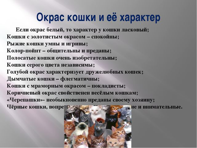 Окрас кошки и её характер Если окрас белый, то характер у кошки ласковый; Кош...