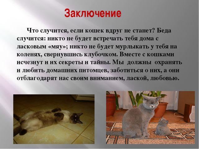 Заключение Что случится, если кошек вдруг не станет? Беда случится: никто не...
