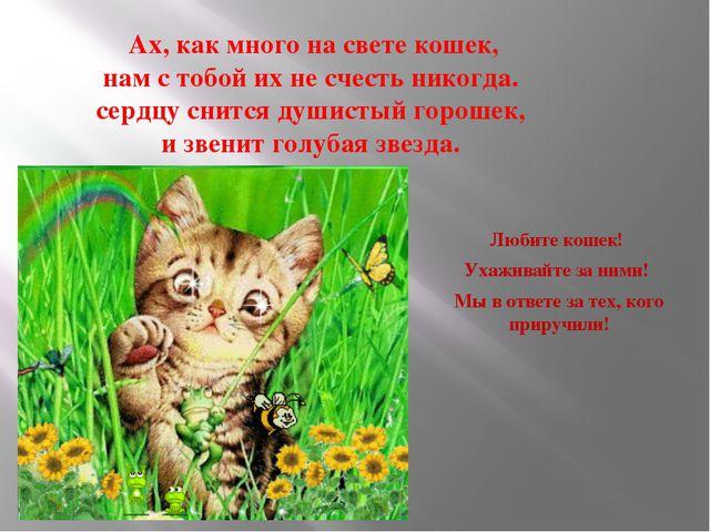 Ах, как много на свете кошек, нам с тобой их не счесть никогда. сердцу снитс...