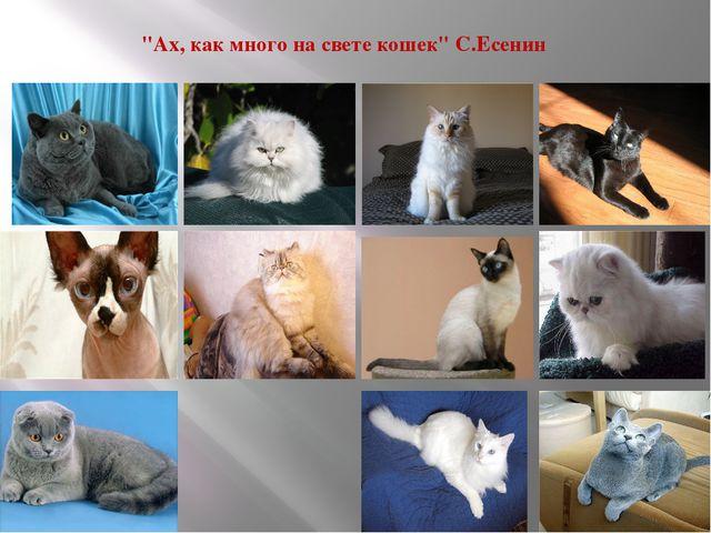 """""""Ах, как много на свете кошек"""" С.Есенин"""