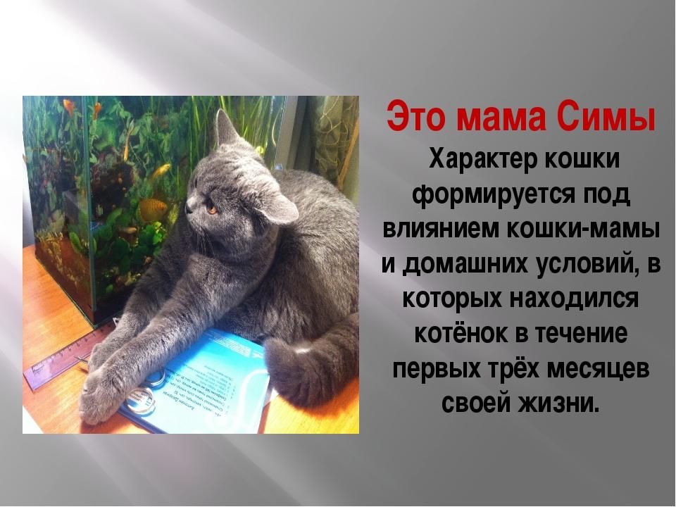 Это мама Симы Характер кошки формируется под влиянием кошки-мамы и домашних у...