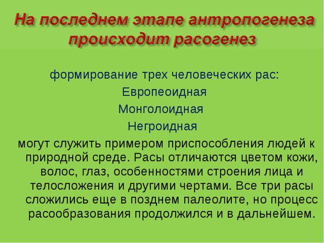 формирование трех человеческих рас: Европеоидная Монголоидная Негроидная мог...