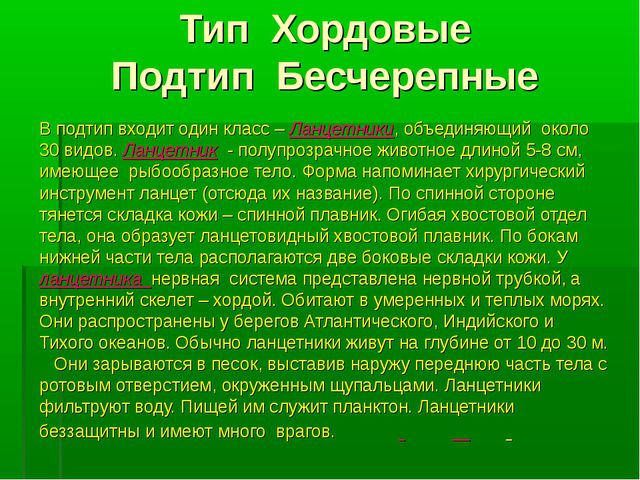 Тип Хордовые Подтип Бесчерепные В подтип входит один класс – Ланцетники, объе...
