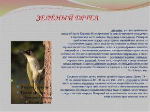 ЗЕЛЁНЫЙ ДЯТЕЛ Зелёный дя́тел— птица семействадятловых, распространённая в