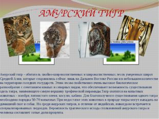 АМУРСКИЙ ТИГР Амурский тигр - обитатель хвойно-широколиственных и широколиств