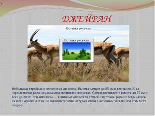 ДЖЕЙРАН Н Небольшая стройная и легконогая антилопа. Высота самцов до 85 см и