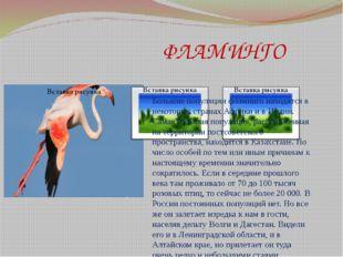 ФЛАМИНГО Большие популяции фламинго находятся в некоторых странах Африки и в