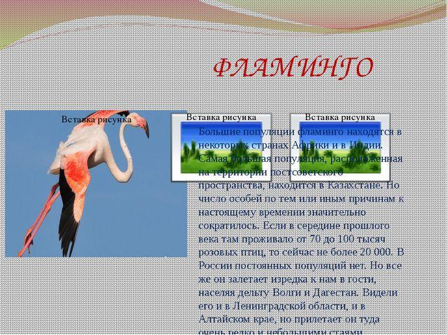 ФЛАМИНГО Большие популяции фламинго находятся в некоторых странах Африки и в...