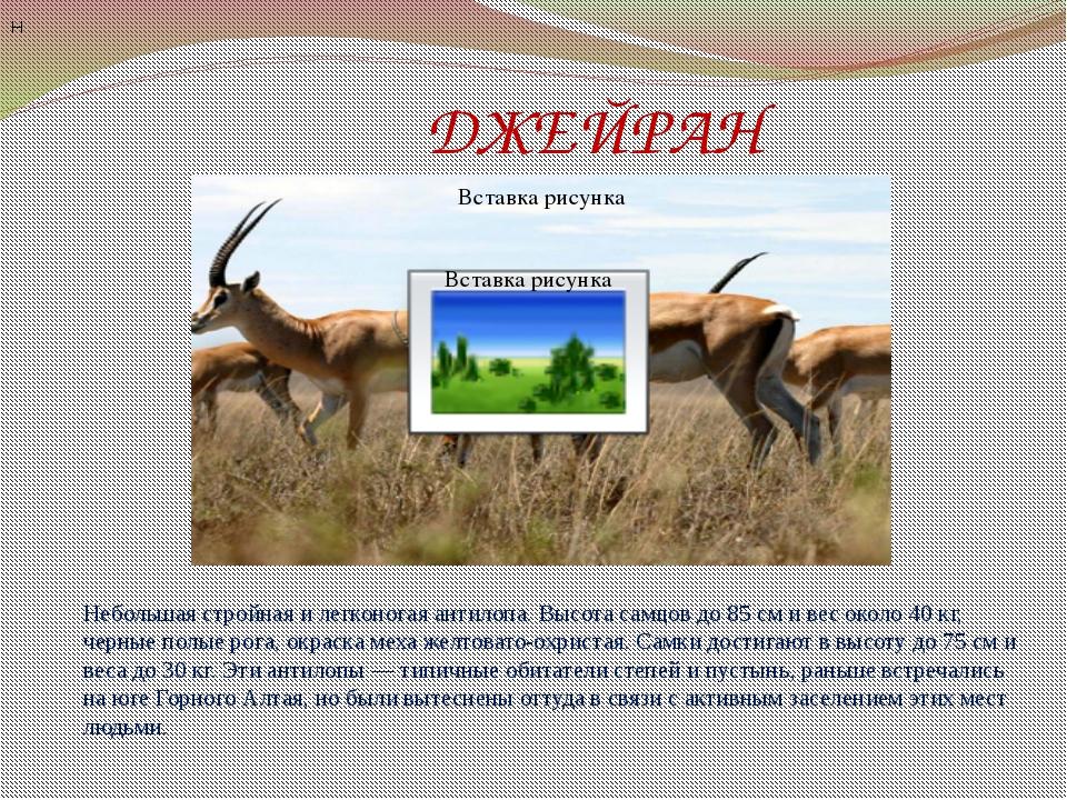 ДЖЕЙРАН Н Небольшая стройная и легконогая антилопа. Высота самцов до 85 см и...