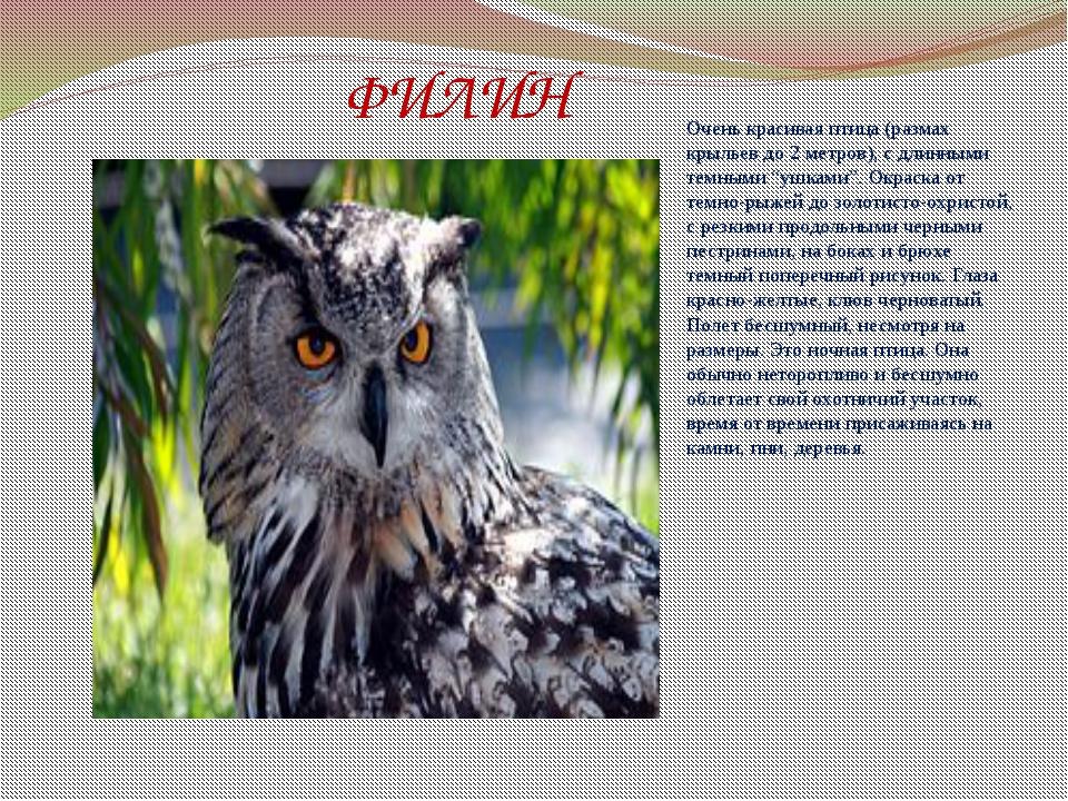 """ФИЛИН Очень красивая птица (размах крыльев до 2 метров), с длинными темными """"..."""