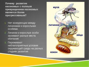 Почему развитие насекомых с полным превращением насекомых является более прог