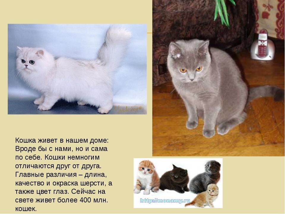 Кошка живет в нашем доме: Вроде бы с нами, но и сама по себе. Кошки немногим...
