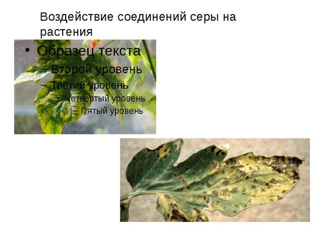 Воздействие соединений серы на растения