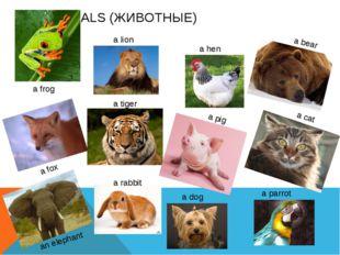 ANIMALS (ЖИВОТНЫЕ) a frog a lion a tiger a fox an elephant a rabbit a hen a p