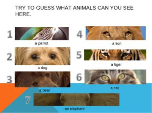 TRY TO GUESS WHAT ANIMALS CAN YOU SEE HERE. a parrot a dog a bear a lion a ti