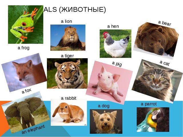 ANIMALS (ЖИВОТНЫЕ) a frog a lion a tiger a fox an elephant a rabbit a hen a p...
