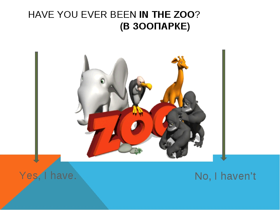 HAVE YOU EVER BEEN IN THE ZOO? (В ЗООПАРКЕ) Yes, I have. No, I haven't