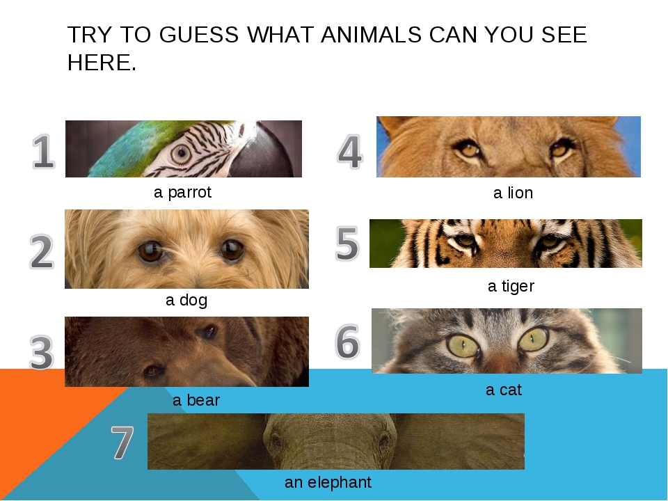 TRY TO GUESS WHAT ANIMALS CAN YOU SEE HERE. a parrot a dog a bear a lion a ti...
