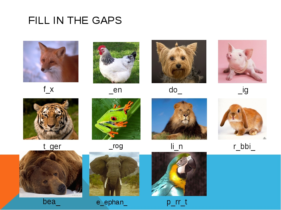 FILL IN THE GAPS f_x _en do_ _ig t_ger _rog li_n r_bbi_ e_ephan_ p_rr_t bea_
