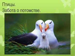 Птицы. Забота о потомстве.
