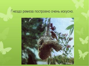 Гнездо ремеза построено очень искусно.