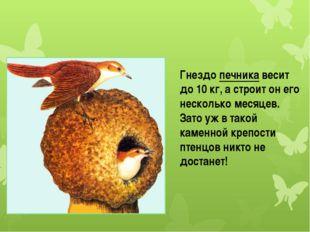 Гнездо печника весит до 10 кг, а строит он его несколько месяцев. Зато уж в