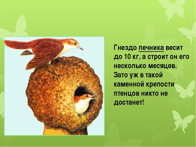 Гнездо печника весит до 10 кг, а строит он его несколько месяцев. Зато уж в...