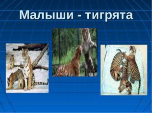 Малыши - тигрята